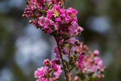 Rosa skönhet i skogen arkivfoton