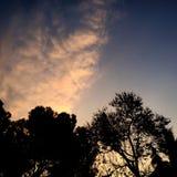 rosa sky Arkivbilder