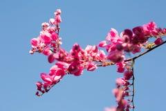rosa sky för blommor Arkivbild