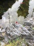 Rosa sländakryp som vilar vid dammet Royaltyfria Bilder