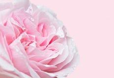 Rosa slut för mjuk fokus upp royaltyfria foton