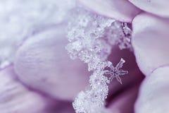 Rosa snöflinga med utrymme för text royaltyfri bild