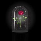 Rosa sob uma abóbada de vidro Fotografia de Stock Royalty Free