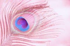 rosa soft för bakgrund Arkivfoton