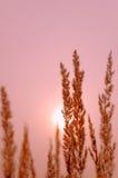 rosa solnedgång Arkivbild