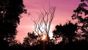 Rosa solnedgång i skogen Royaltyfri Foto