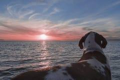 Rosa solnedgång med valpen Arkivbild