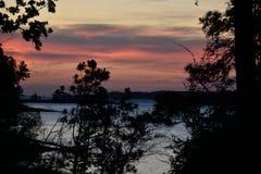 Rosa solnedgång- och blåttsjö till och med trädkontur Royaltyfri Bild