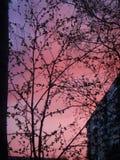 Rosa Sonnenuntergang über unserer Stadt Lizenzfreies Stockbild