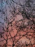 Rosa Sonnenuntergang über unserer Stadt Lizenzfreie Stockbilder