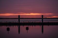 Rosa Sonnenuntergang inmarine mit, das den Vögeln sitzen auf einer Anlegestelle ist Stockbild