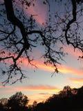 Rosa Sonnenuntergang-Wolken in Texas Stockfotografie