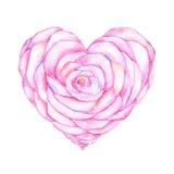 Rosa sotto forma del lavoro dell'acquerello del cuore Fotografia Stock
