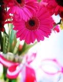 rosa stöt för gerbera Arkivfoto