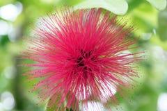 Rosa stachelige Blume Lizenzfreie Stockbilder