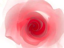 Rosa stieg lizenzfreie stockfotos