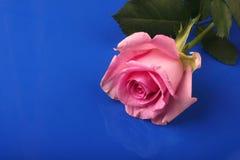 Rosa stieg Lizenzfreies Stockfoto