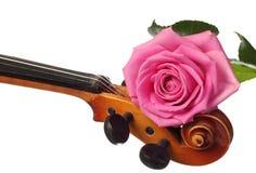 Rosa stieg auf eine Violine Stockfotos