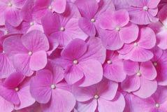 rosa ström Royaltyfri Foto