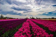 rosa ström Royaltyfria Bilder