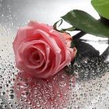 Rosa su fondo bagnato Immagine Stock