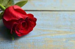 Rosa su fondo di legno blu per il giorno del ` s del biglietto di S. Valentino con lo spazio della copia Valentine Rose Fotografia Stock
