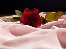 Rosa su seta dentellare Immagini Stock