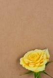 Rosa su un documento introduttivo. Immagine Stock Libera da Diritti