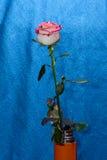 Rosa su un gambo in un vaso fotografie stock