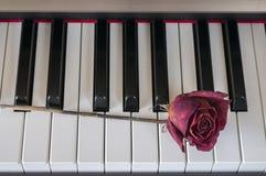 Rosa su un piano Fotografie Stock