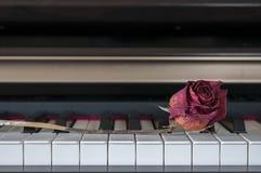Rosa su un piano Fotografia Stock Libera da Diritti