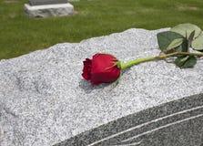 Rosa su una tomba immagine stock libera da diritti