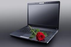Rosa sul computer portatile Fotografie Stock Libere da Diritti