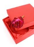 Rosa sul contenitore di regalo fotografia stock libera da diritti