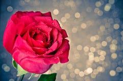 Rosa sul fondo del bokeh, sul giorno di S. Valentino e sul concetto blu di amore Fotografia Stock Libera da Diritti
