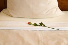 Rosa sul letto Fotografia Stock Libera da Diritti