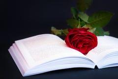 Rosa sul libro Immagine Stock