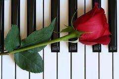 Rosa sul piano Fotografie Stock