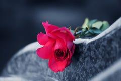Rosa sulla pietra tombale Fotografie Stock