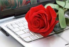 Rosa sulla tastiera Immagine Stock