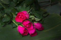 Rosa sulle foglie della banana Fotografia Stock