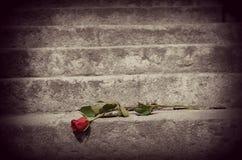 Rosa sulle scale Immagine Stock