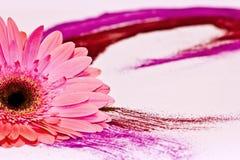 rosa swirl Arkivbild