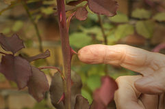 Rosa tagg för fingertouchs Arkivfoton