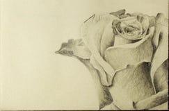 Rosa teckning för detalj Arkivbild