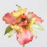 Rosa Textilblume Stockfotos