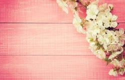 Rosa träbakgrund med att blomma den söta körsbäret förgrena sig tonad bild fotografering för bildbyråer
