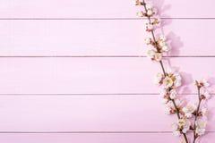 Rosa träbakgrund med filialer av att blomstra aprikos- och kopieringsutrymme för text royaltyfri foto