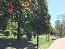 Rosa träd Arkivbild
