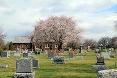 Rosa träd i kyrkogård Arkivbild